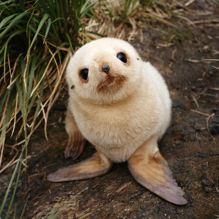 [Image: 05-baby-seal.w700.h700.jpg]