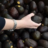 New Zealand Facing Spike in High-Volume Avocado Heists