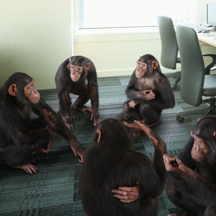 turns out apes are pretty good at office politics too science of us