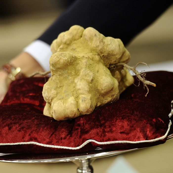 A humongous Italian truffle in Alba.
