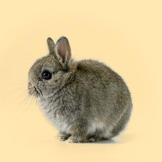 Baby rabbit, close-up --- Image by ? 2/Digital Zoo/Ocean/Corbis