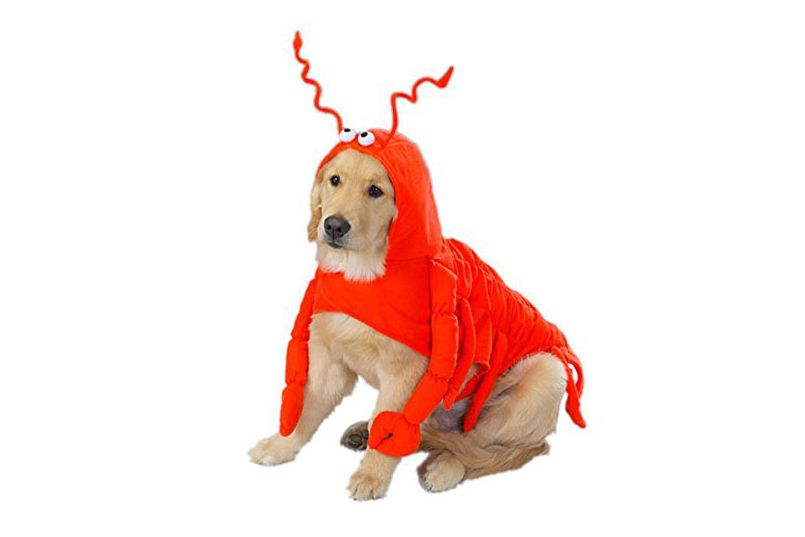 CASUAL CANINE LOBSTER PAWS DOG COSTUMES