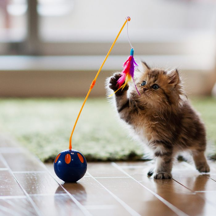 b19b79e8 The 34 Best Gifts for Cat Lovers, According to Feline Behaviorists,  Advocates, and Enthusiasts