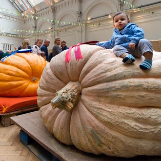 The Royal Horticultural Society's 2015 Harvest Festival Show