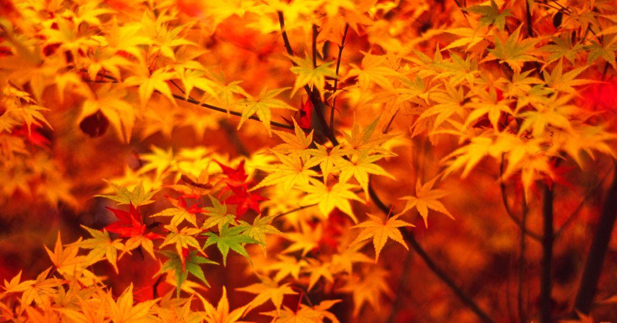 Beware Autumnal Gonorrhea