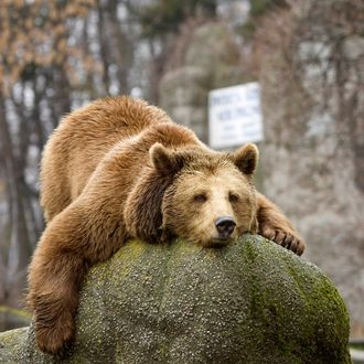 A bear lies on an artificial stone in a zoo in Warsaw March 9, 2009.
