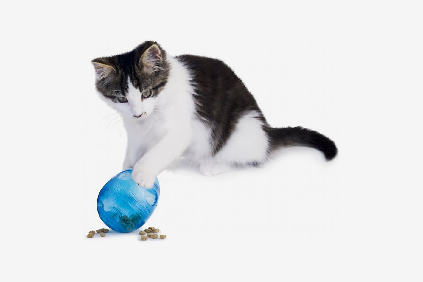 PetSafe Funkitty Egg-Cersizer Cat Toy