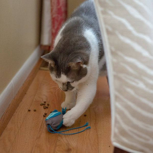 Kit mangeoire pour chats de chasse d'intérieur Doc & Phoebe's Cat Co.