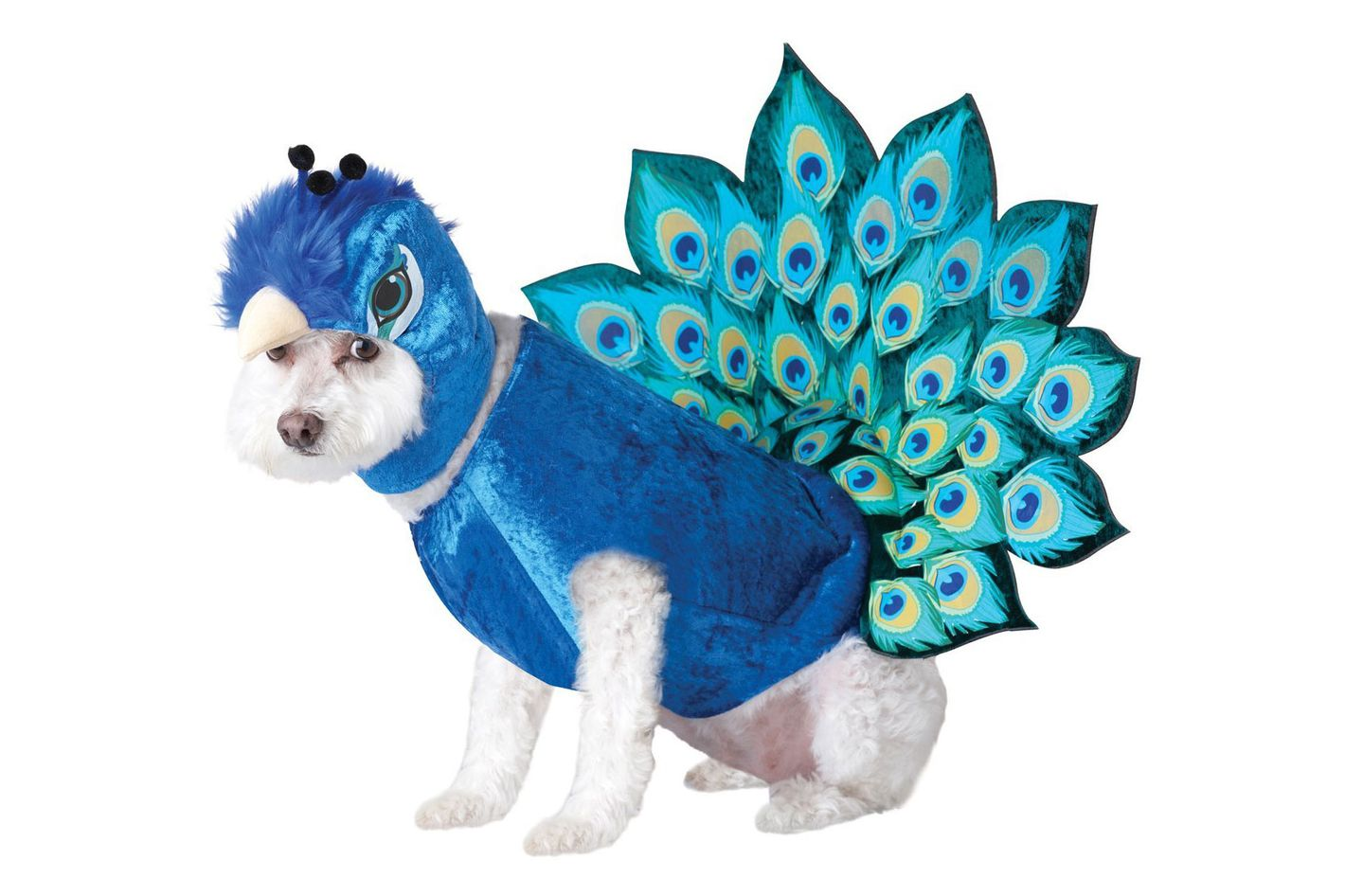Animal Planet Peacock Dog Costume, Multicolor