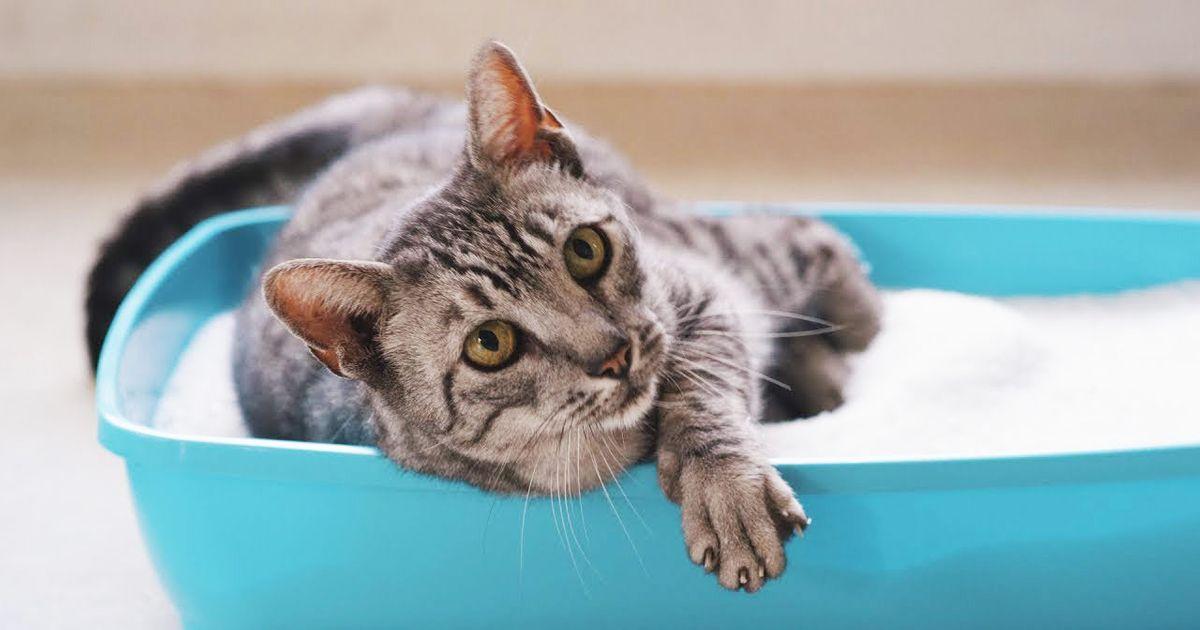 Image result for kitty litter