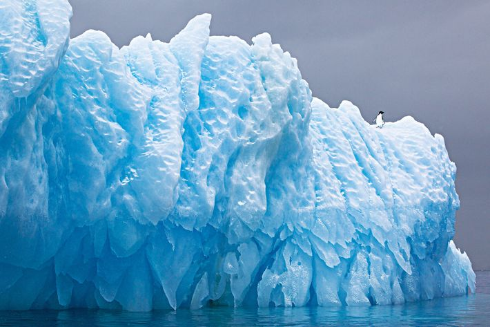 Iceberg with Adelie Penguin