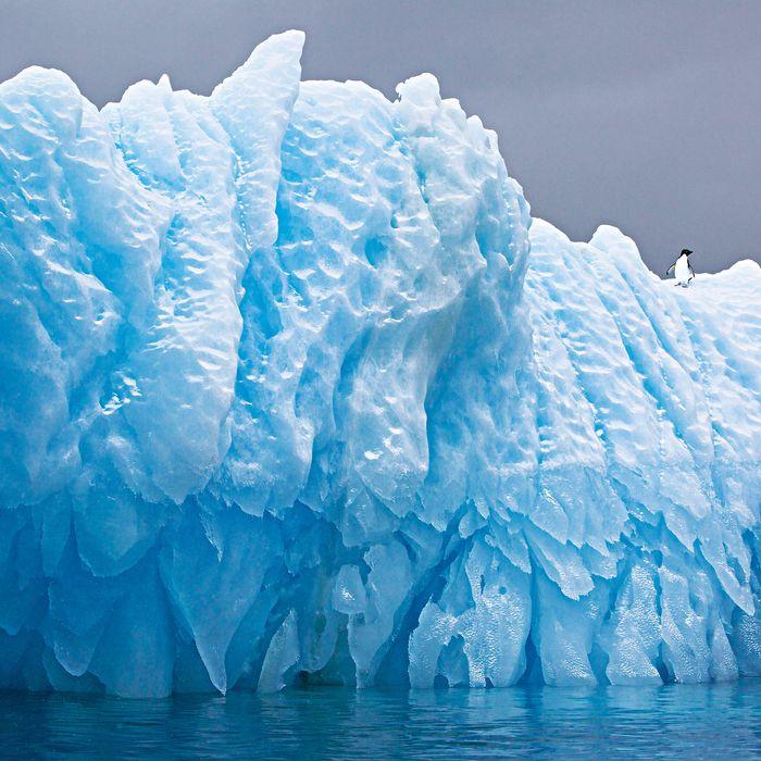 Iceberg with Adelie Penguin