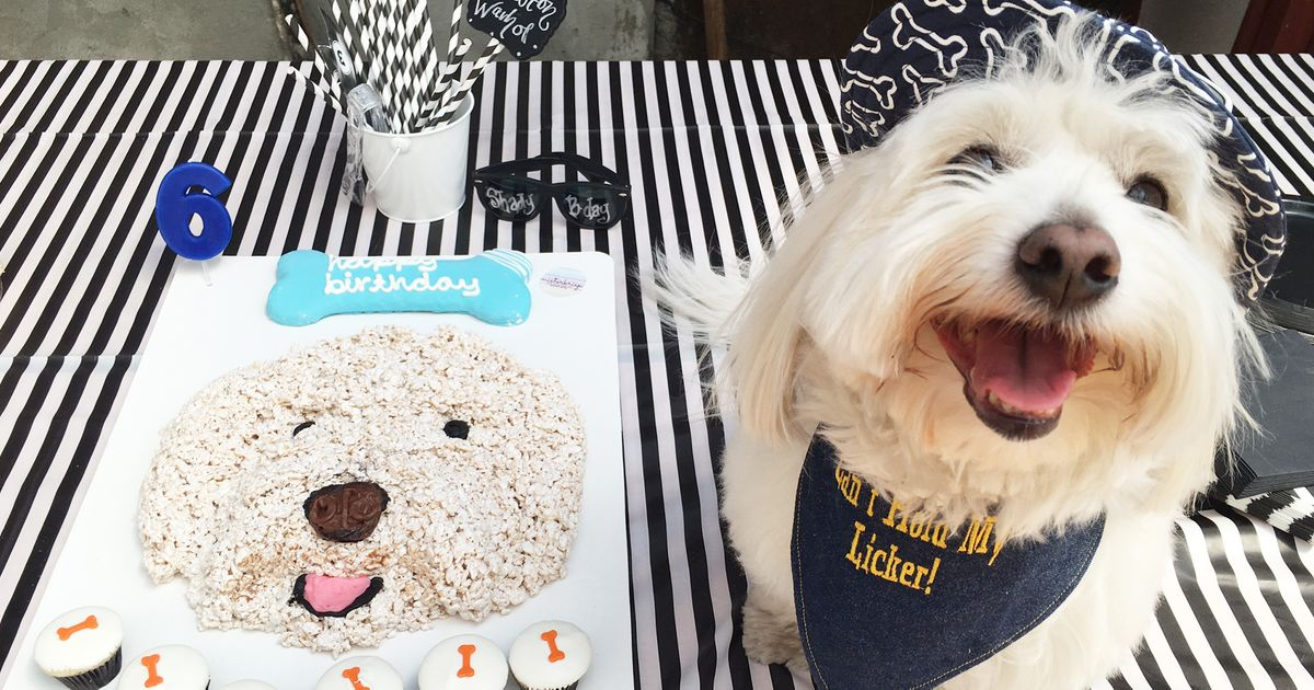 Dog Birthday Parties The Best New Way To Waste Money