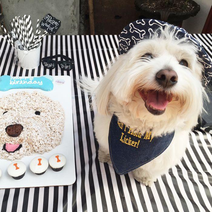 Swell Dog Birthday Parties The Best New Way To Waste Money Funny Birthday Cards Online Inifodamsfinfo