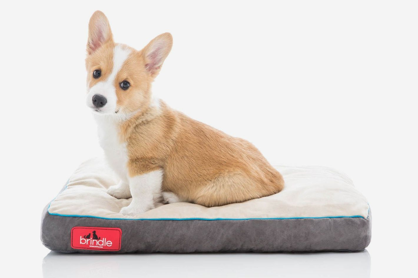 15 Best Dog Beds 2018 Foam Suede Shag Cooling