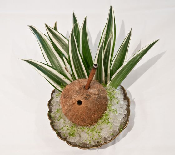 Angostura 1824 rum, fresh coconut cream, acacia honey, and lime juice, served in a frozen coconut.