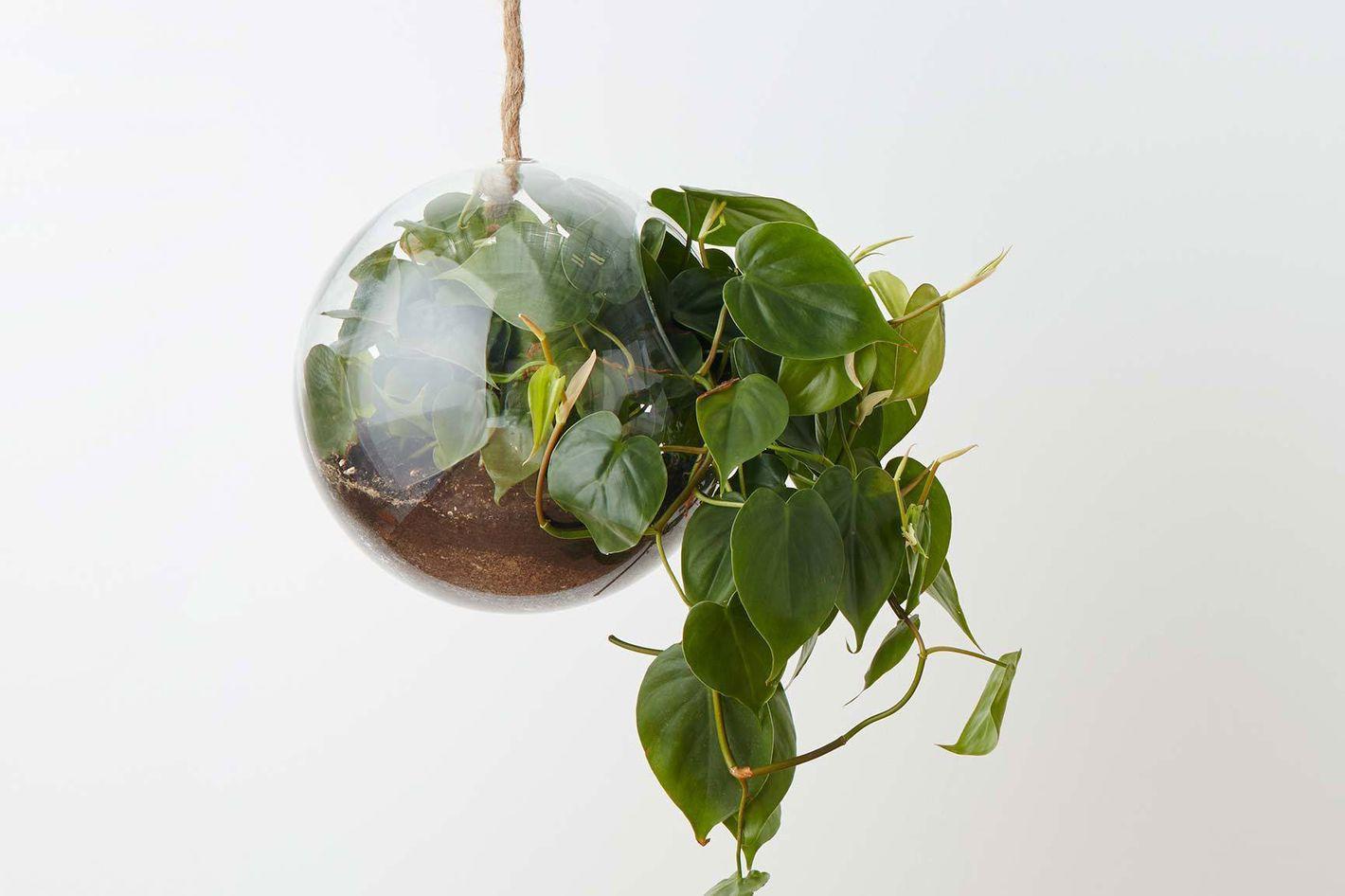 Hanging sphere terrarium