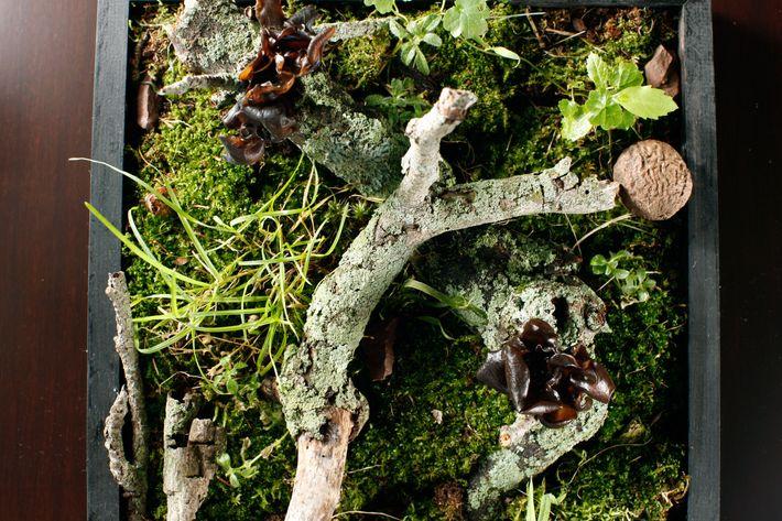 An amuse course of woodear mushrooms.