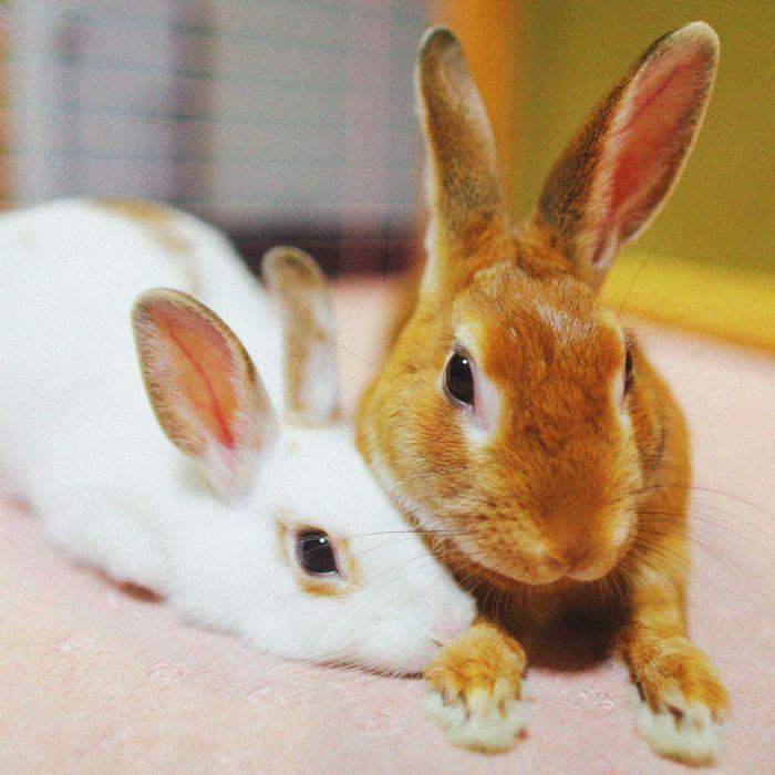Bunny Ebola The Mysterious Virus Killing House Rabbits