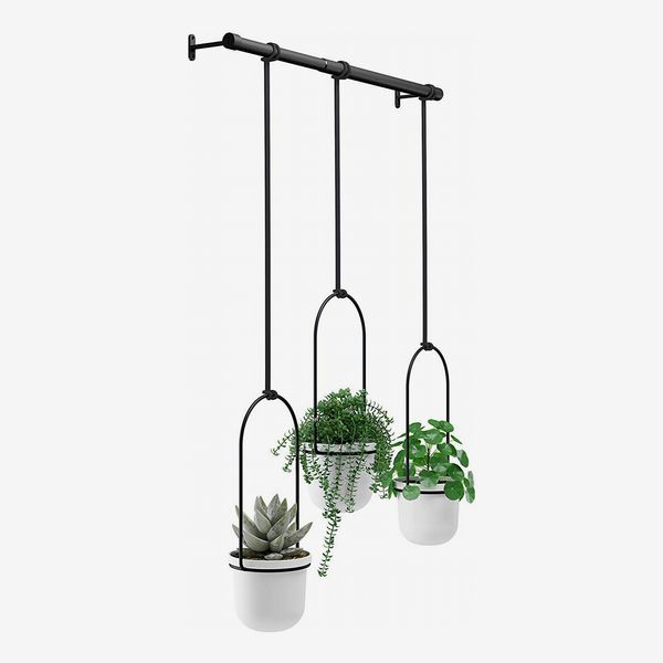 Umbra Triflora Hanging Planter for Window