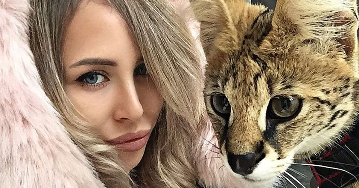 I Want to Be a Russian Instagram Girl With a Big Cat