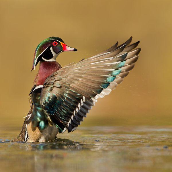 Bird Photography with Melissa Groo