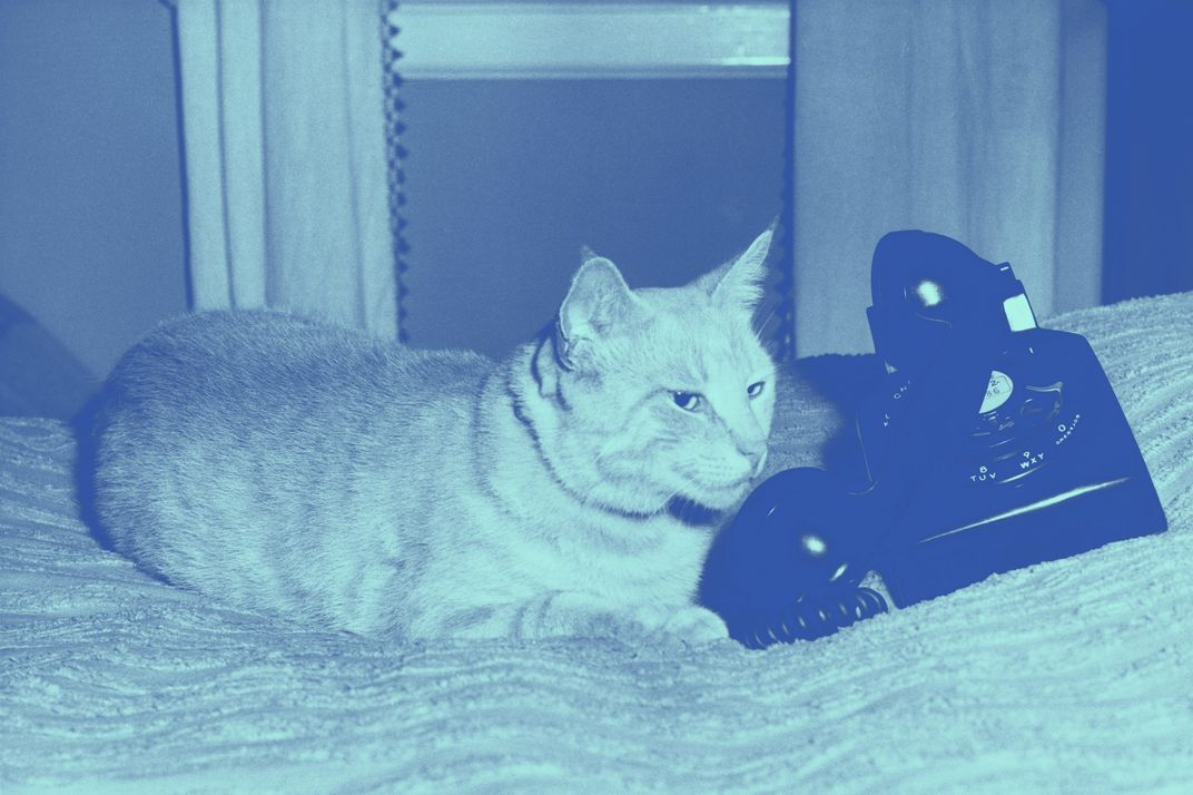 Cat lying in bed with a telephone.