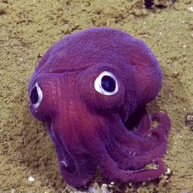 15-google-eye-cuttlefish.w190.h190.2x.jpg