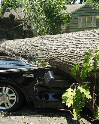 FALLS CHURCH, VA - JUNE 30: A downed tree damages a truck after a powerful overnight storm in the Washington, DC region June 30, 2012 in Falls Church, Virginia. The storm has left more than a million people in the greater Washington, DC area without power. (Photo by Alex Wong/Getty Images)