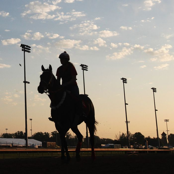 Horses train on the track in preparation for the 138th Kentucky Derby at Churchill Downs on May 2, 2012 in Louisville, Kentucky.