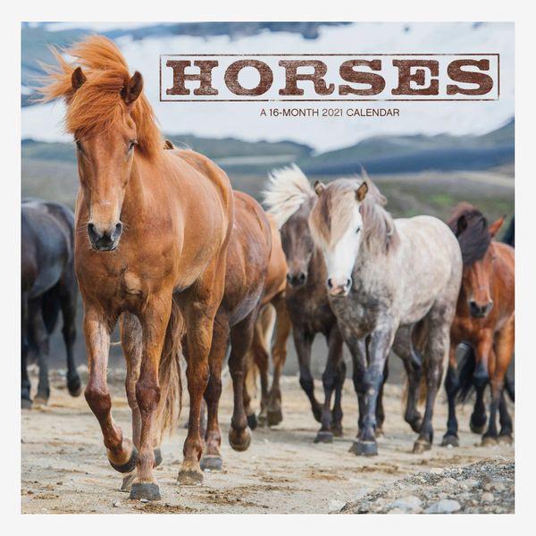 Trends International 2021 Horses Wall Calendar