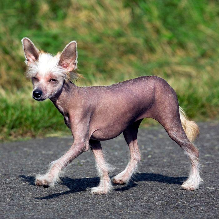 naked-hairless-crotches-amatuer-masturbating-pussy