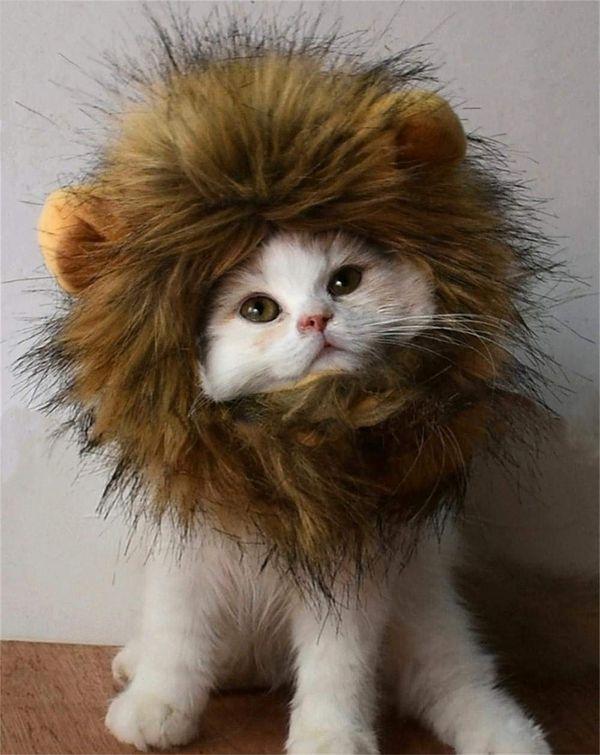 Peluca de melena de león RosyLife para gatos