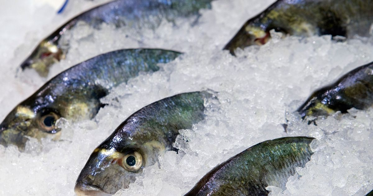 New york chefs now required to freeze raw fish changing for How to freeze fish