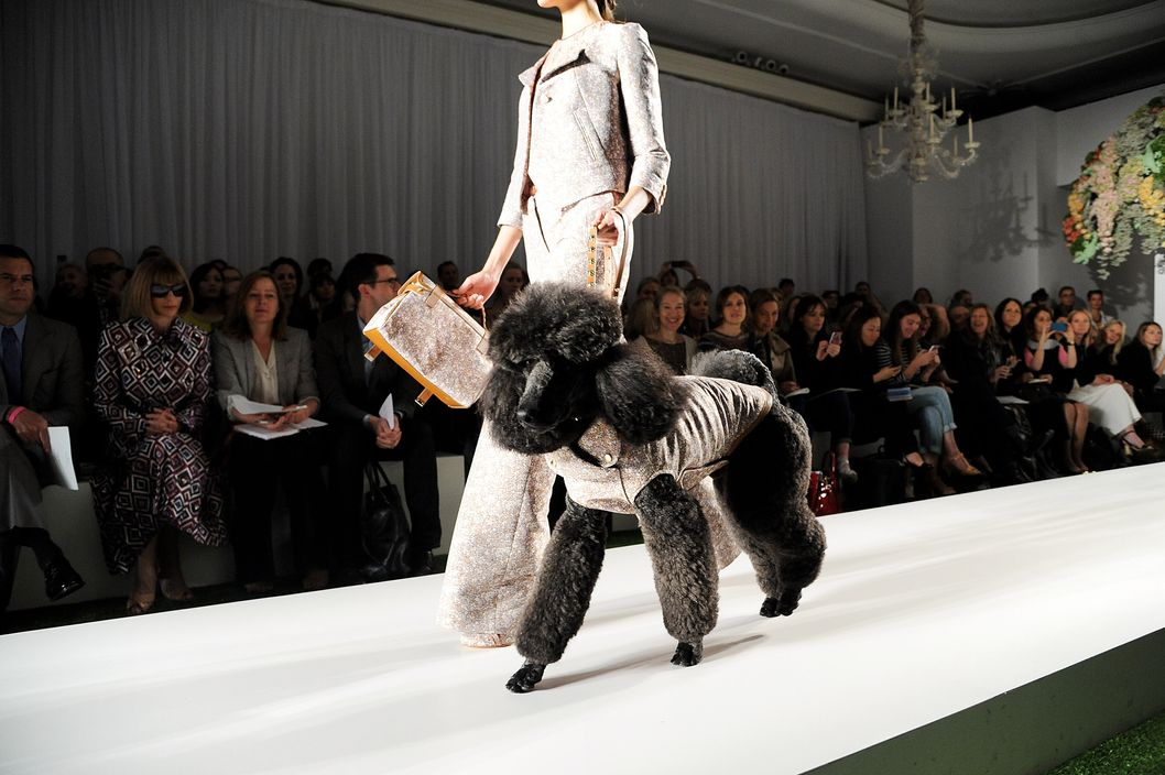 A dog walks the runway during the Mulberry Spring/Summer 2013 Show during London Fashion Week at Claridge's on September 18, 2012 in London, England.
