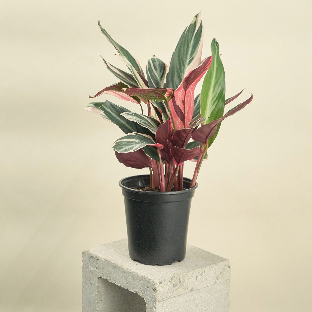Best Potting Soil for Indoor Plants 2019 | The Strategist ... on plants at homegoods, plants that repel mosquitoes, plants at harris teeter, plants at kroger, plants at disney, vines depot, plants at office depot, plants at michaels, plants at kmart, plants with white flowers, plants at cvs, plants under evergreen trees, plants at ikea, plants at tj maxx, plants inside home, plants at sam's club, plants at publix, plants that repel bugs and pests, plants at safeway, plants at menards,