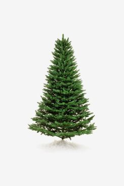 Home Depot 7.5 ft Freshly Cut Turkish Fir Live Christmas Tree