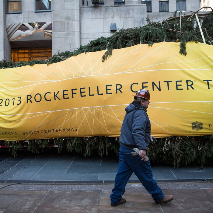 A worker walks past a 76-foot tall Norway Spruce, from Shelton, CT, while it is prepared to be hoisted into position as the 2013 Rockefeller Center Christmas Tree on November 8, 2013 in New York City. The tree comes from the Vargoshe family, it was likely planted in the 1950s.
