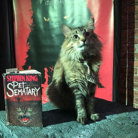 140c0b2ef2f9 Cats from Pet Sematary, Captain Marvel Walk Red Carpet