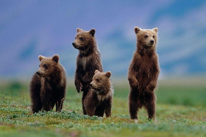 100+ Free Bear Cubs & Bear Images - Pixabay
