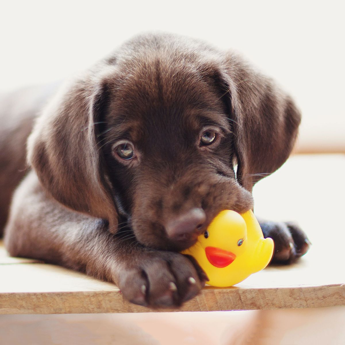 13 Best Things for Teething Puppies