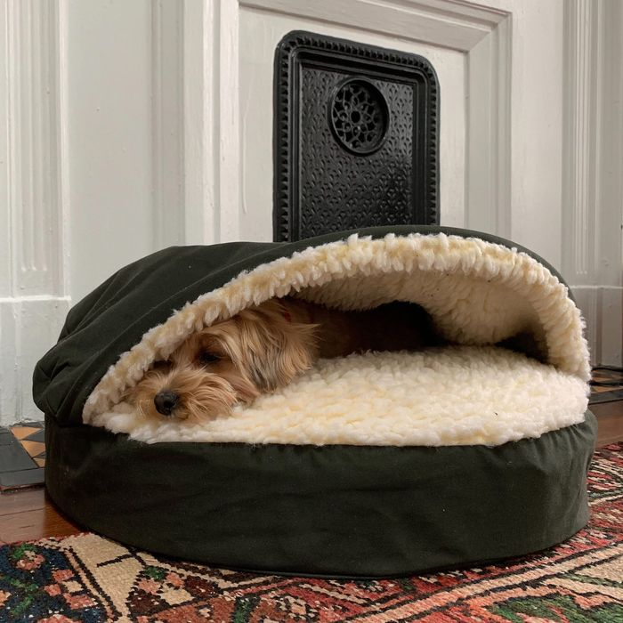 Best Dog Beds According To Experts