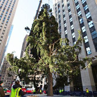 Kennedy Plaza Christmas Tree Lighting 2021 Watch The 2020 Rockefeller Christmas Tree Has Arrived