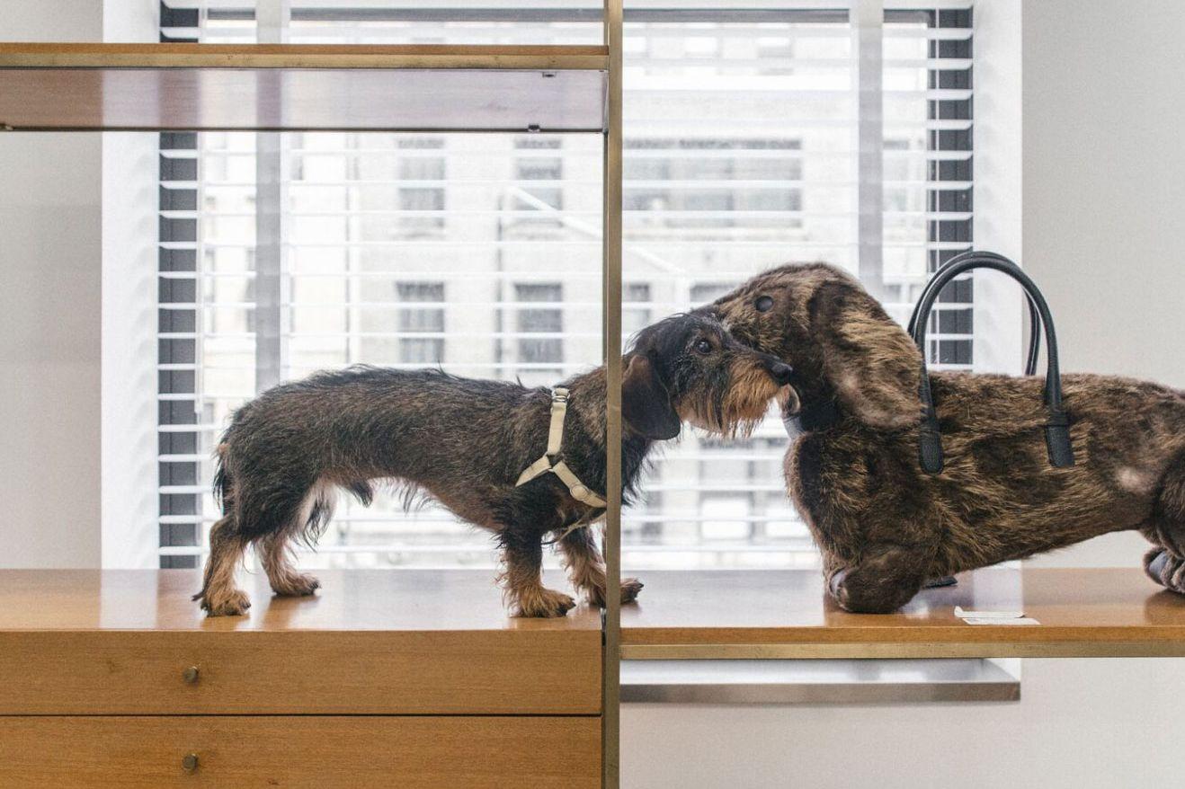 Thom Browne\'s Wiener Dog Hector Has His Own Instagram