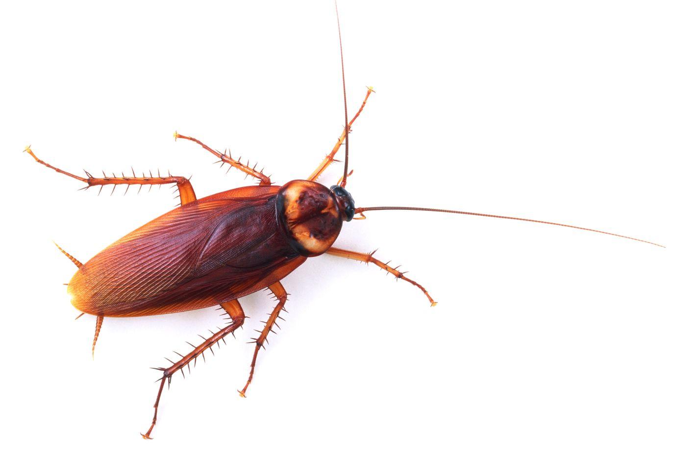 Как избавиться от тараканов в 54