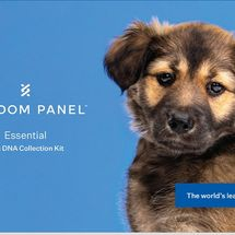 Wisdom Panel Essential Breed Identification DNA Test for Dogs