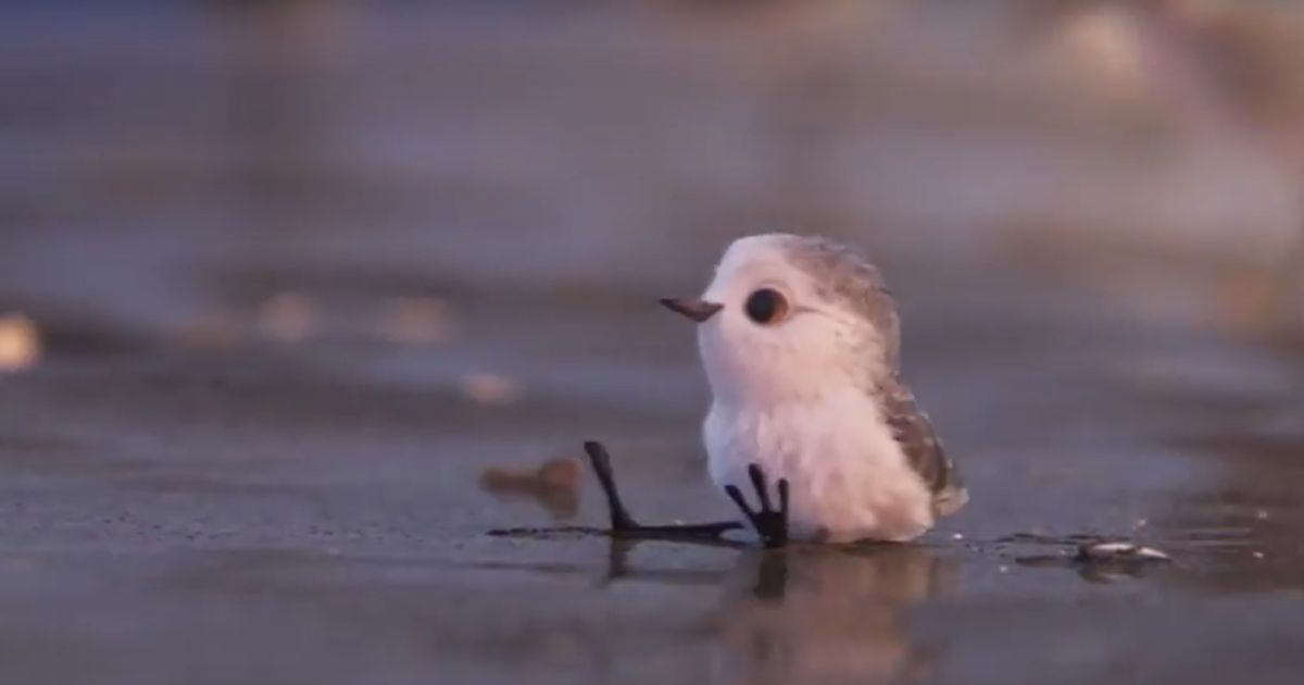 piper teaser pixar s new short is overwhelmingly cute