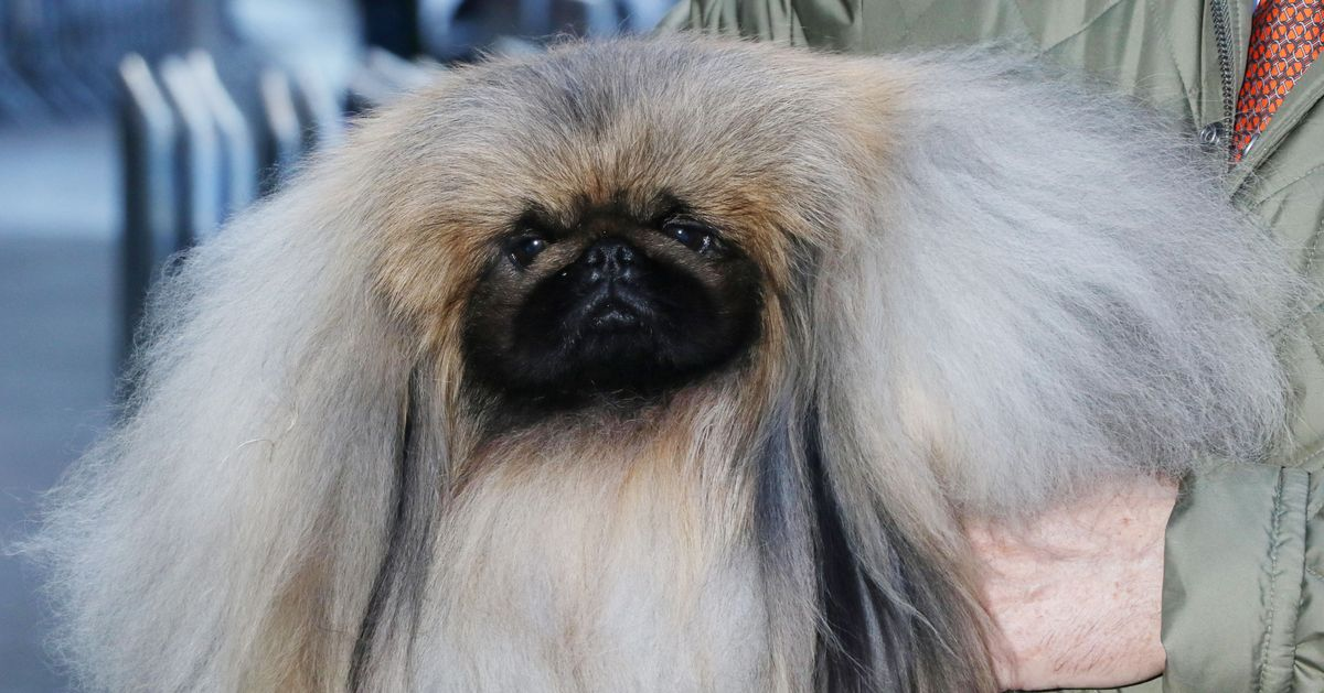 Is This Really a Dog?
