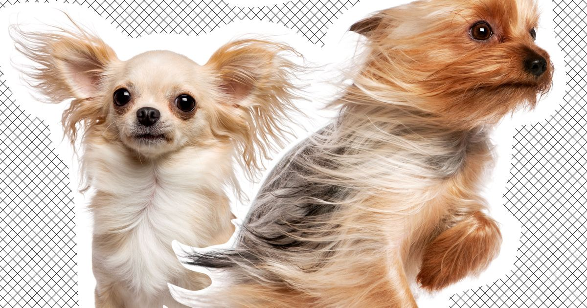 Crisis in Cleveland: Small Dogs Face 50-mph Winds