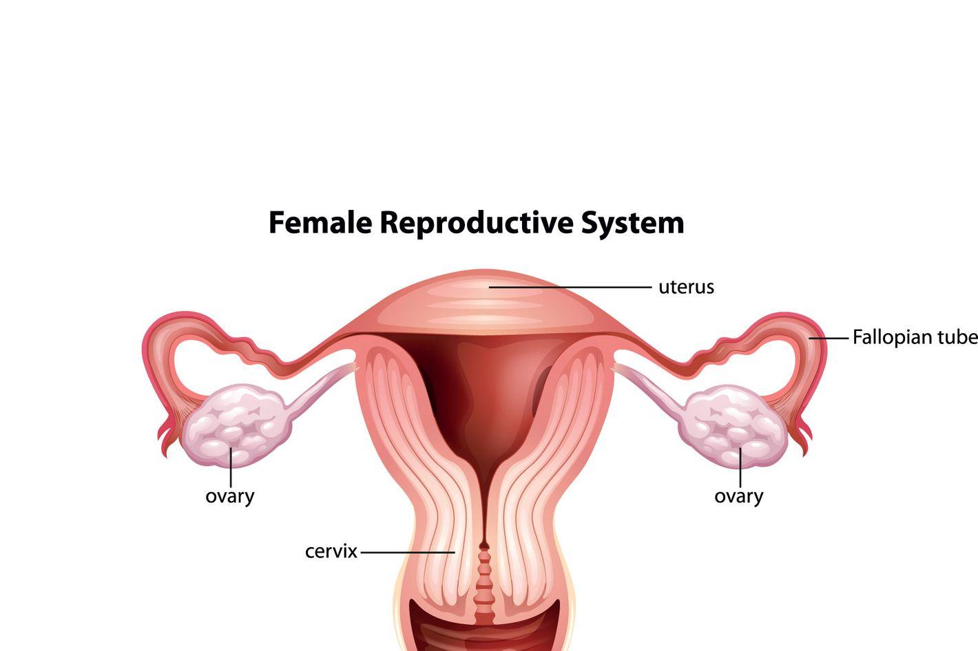 Is My Cervix Weird-Looking?